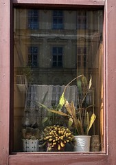 Cacti (Michael Goldrei (microsketch)) Tags: street iphoneography iphonography iphone 2018 österreich austria wien vienna house frame windowframe spiky spikey cactii cacti cactus green plants plant windows window