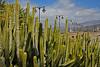 Islas Canarias: Tenerife (thehydra14) Tags: islascanarias islas canarias tenerife march2018 march 2018 traveling trip travel roadtrip friends canaryislands teide volcano vulkan island canaries