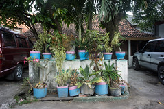 (kuuan) Tags: house pots flowers plants indonesia voigtländerheliarf4515mm manualfocus mf voigtländer15mm aspherical f4515mm superwideheliar apsc sonynex5n surabaya street java