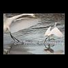 time to go (wildlifephotonj) Tags: egret egrets greategret greategrets snowyegret wildlifephotographynj naturephotographynj wildlifephotography wildlife nature naturephotography wildlifephotos naturephotos natureprints birds bird birdphotography wadingbirds