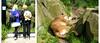 Nounours et Puma (Raymonde Contensous) Tags: puma maséo félin félidé parczoologiquedeparis zoodevincennes nature visiteurs personnes