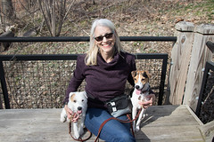 Walking the Dogs with Kevin (marylea) Tags: apr23 2018 park bordertobordertrail dexter michigan trail puppies dooley maddy me parsonrussellterrier parsonrussell terrier dogs puppy dog 9monthsold 16monthsold