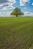 Tree of life (Ron Jansen - EyeSeeLight Photography) Tags: norway spring tree oak green fresh field grow growing new sun blue bright light singular depth