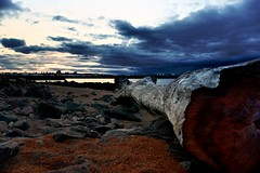 Torry Point Driftwood (matthewblackwood10) Tags: sorry point driftwood drift wood aberdeen uk scotland aberdeenshire sea ocean coast shore beach rocks stones sand dust sawn sawdust trunk tree log grain sky clouds cloud