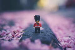 on her majesty's (secret) service (christian mu) Tags: lego legominifiguren legominifigures toys germany muenster münster depthoffield dof bokeh 35mm 3514 distagon3514 distagon sony sonya7riii sonya7rm3 zeiss spring