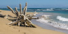 sculptured by cyclone irma (rey perezoso) Tags: 2018 quisqueya tree beach samaná wood sand playa ellimón caribe mar strand caribbean ocean atlantic republicadominicana coast