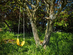 THE YELLOW SWING (shoebox50) Tags: green yellow outdoors swing olympuspenf victoriabc canada blue tree grass fun kids