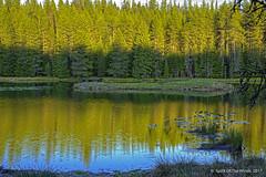 "Moose Creek Reservoir (jimgspokane) Tags: moosecreekreservoir camping idahostate lakes forests trees reflections today´sbest ""nikonflickraward"""