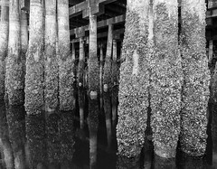 Under the Pier, Vancouver (Lee Edwin Coursey) Tags: 2018 vancouver canada vacation vancouverisland travel