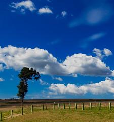 017/365 (rrrv13) Tags: sky blue nature ceu azul natureza cloud nuvens pasto verde algodao brazil brasil mata atlantica parana ponta grossa buraco do padre turismo turist