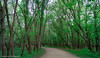 Fort Snelling State Park (Lizzy Lentsch Photography) Tags: minnesota saintpaul fortsnelling fortsnellingstatepark statepark minnesotastatepark park may spring woods forest tree path
