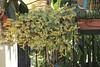 one of the ten vases... (Lina Polmonari) Tags: balcone balcony leaves yellowflowers sprout azalea redflowers sempervivum sempreverde vases