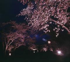 Cherries in Urakawa (threepinner) Tags: urakawa hokkaidou hokkaido northernjapan japan mamiya universal press sekor 50mm f63 positive velvia selfdeveloped night cherry 浦河 うらかわ優駿ビレッジaeru 北海道 北日本 日本