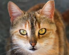 Paros /les chats /Cats (beluga 7) Tags: paros chats cats greece