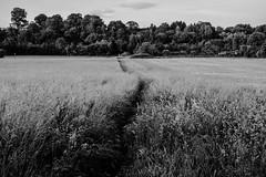 Der Pfad - The path (R. Henne) Tags: bw blackandwhite sw monochrome pfad path