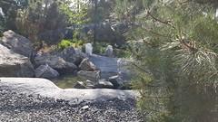 20180523_104810 (TheSlayerNL) Tags: wildlands emmen zoo dieren animals adventure wildlandsadventurezoo