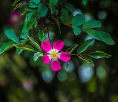 Bush Baby. (Omygodtom) Tags: contrast flickr coth5 style pond kitlens 18105lens nature nikon usgs dof d7100