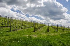 20180430_Barolo_14-31-32 (al.simonoff) Tags: 2018 italy piemonte vino barolo it