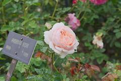 D75_3454 (joezhou2003) Tags: huntington rose garden architecture nikon d750 24120mm vr