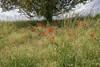 _DSC0177 (LonesomeCrow67) Tags: 2018 natur pflanzen baum blüten blume ludwigsburg süd