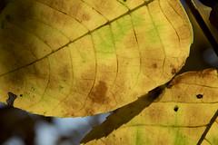 beyond the eyesight (ByotA .... OFF) Tags: two leaves antoniovivaldi hope dream omar byota canoneosrebelt6i 2018