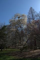 20180420.018 (FOTOGRAFIA.Nelo.Esteves) Tags: 2018 usa us unitedstates nj newjersey monmouthcounty holmdel park nature spring blossoms