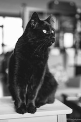 Black cat (WillemijnB) Tags: black bw blackandwhite blackcat cat kat katze chat books library livres book bibliotheek bibliothèque hmbt monochrome bokeh dof