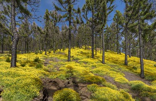 *La Palma @ Spring Forest*