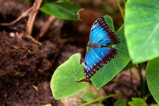 Impossibly Blue - _TNY_0317