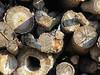 w 10 (BENPAB) Tags: cherry cob sands stoney creek east yorkshire humber