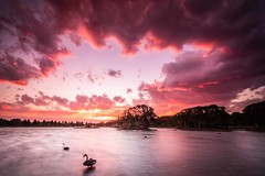Sunset at Centennial Park in Sydney (Keith McInnes Photography) Tags: 2018 australia keithmcinnesphotography nsw sydney centennialpark sunset