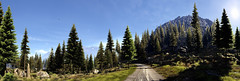 Tom Clancy's Ghost Recon - Wildlands (Matze H.) Tags: tom clancys ghost recon wildlands forrest wood bolivia trail track road tree trees mountain grass rocks panorama ansel screenshot nvidia geforce