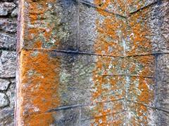Lichen on the outside church walls (debstromquist) Tags: lichen churchwalls stkevinschurch glencree countywicklow ireland 1860 spring catholicchurches beautyofnature
