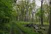 (Matt In Color) Tags: lakecountyforestpreserve ryerson path green trees outside nature illinois canon 6d