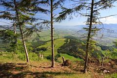 View above the Rhine Valley (Harald Schnitzler) Tags: rüthi sanktgallen schweiz ch montlingerschwamm trees alps valley spring frühling