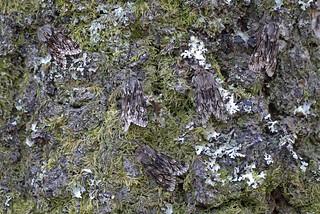 Rannoch Sprawler, Loch Rannoch, Perthshire