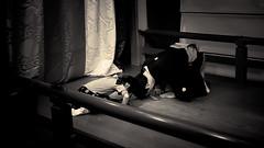 お稽古 - 02 - 09 (Stéphane Barbery) Tags: ayako hayashi soichiro children enfants filles girls japan japon kyoto lesson leçons noh nô okeiko お稽古 京都 宗一郎 彩子 日本 林 能楽