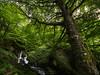 Yo, Bosque (diegogm.es) Tags: olympus omdrevolution omd asturias gumial felechosa aller arbol tree bosque forest green verde naturaleza nature