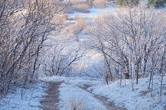 So, this is what snow is all about? 😀 this Floridian was in heaven today. It snowed in Colorado (PointOfUPhotography) Tags: sunrise snowscape road path landscape colorado aprilsnow snow