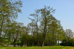 Nature Landscapes (JaapCom) Tags: jaapcom natural natuur trees green wezep dutchnetherlands landscape water