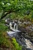 Rogie Falls. Scotland (Tatters ✾) Tags: scotland scottishhighlands highlands waterfalls oak tree