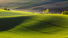 Moravian fields at sunset (Paweł Gałka) Tags: sunset nature golden hour landscape landschaft moravia morawy fields grass green light shadows tree sunshine baum