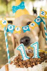 ¡Feliz 11º aniversario Tristán! (gyogzz) Tags: photographie photoshoot canon 80d dog can labrador cake smash