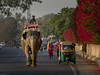 elephant on  street in the morning (Klaus Mokosch) Tags: udaipur urban city street streetlife elephant people india indien asia asien morning