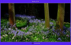 Frühling 2018/Spring 2018/2018年春天/ربيع 2018 (shaman_healing) Tags: frühling spring farben colors garten garden natur nature bochum nrw bäume trees wiese grass
