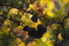 Microcosm... (EOSXTi) Tags: microcosm springtime colorful