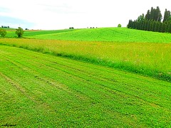 green fields (archgionni) Tags: country landscape trees campi fields grass sky campagna colline hills piemonte italia italy natura nature verde green thisphotorocks