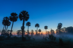 Foggy Florida Dawn (Photomatt28) Tags: circlebbarreserve florida lakeland natureparks sunrise unitedstates us