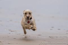 Pimi and Polo-1 (photojen10) Tags: dogs rescuedogs whiterocksbeach portrush coantrim windyday