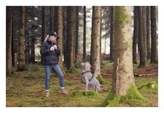 Album Chiens Clients Janvier-Avril 2018 (5) (Dalmatien-Golden-Braque) Tags: dalmatien goldenretriever braquedeweimar chien carcassonne elevage eleveur animaux dog breader